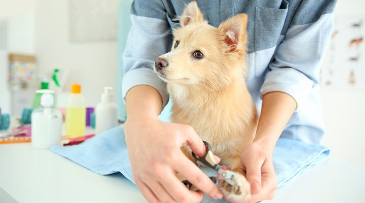 How to Cut Dog Nails?