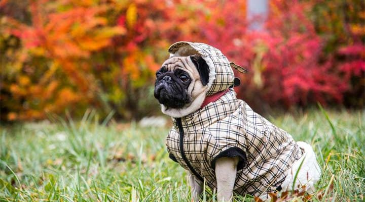 Additional Information About the Clothing of Dogs